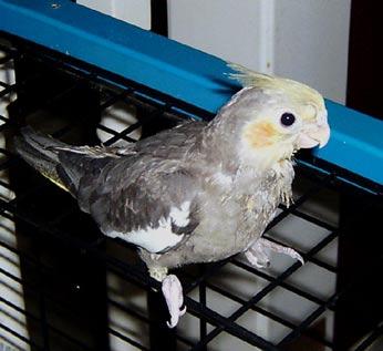 birdie (21k image)